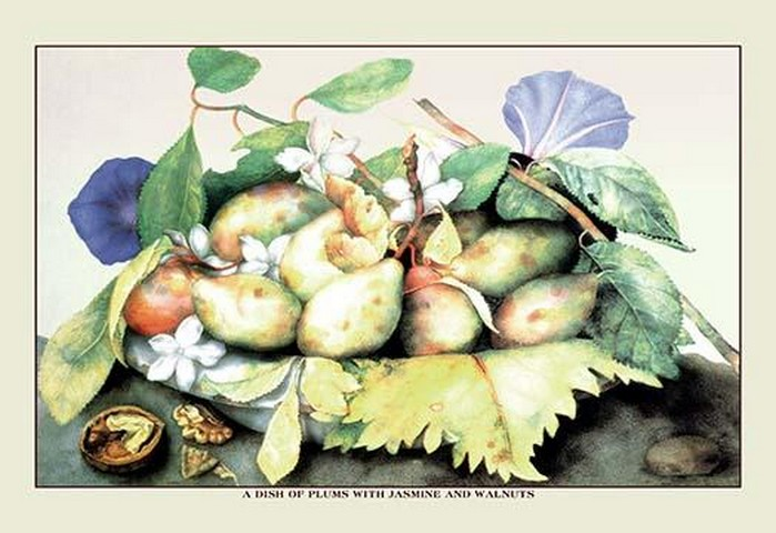 A Dish of Plums with Jasmine and Walnuts by Giovanna Garzoni - Art Print