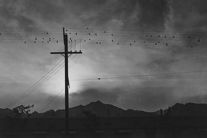 Birds on wire, evening by Ansel Adams - Art Print