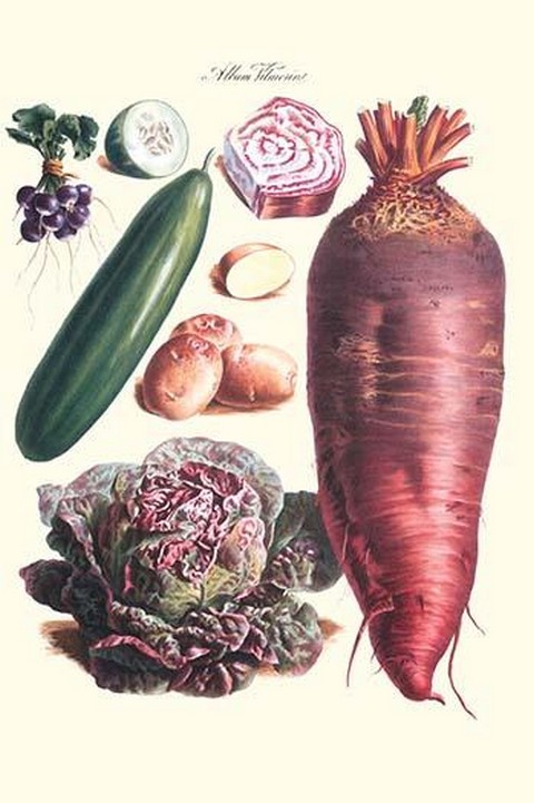 Vegetables; Raddish, cabbage, potato, and cucumber by Philippe-Victoire Lev que de Vilmorin - Art Print