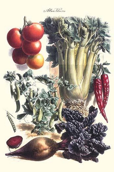 Vegetables; Beet, Hot peppers, Celery, Tomatoes, and Peas in Pods by Philippe-Victoire Lev que de Vilmorin - Art Print