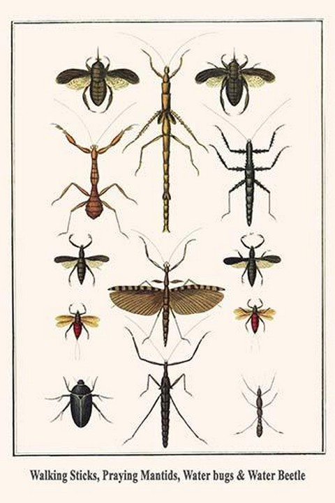 Walking Sticks, Praying Mantids, Water bugs & Water Beetle by Albertus Seba - Art Print