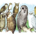 A Hoot of Owls by Theodore Jasper - Art Print