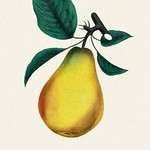 Bartlett Pear - Art Print