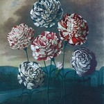 A Group of Carnations - Art Print