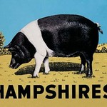 Hampshires by Anonymous - Art Print