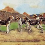 A Group of Gascon-Saintongeois Foxhound Crosses by Baron Karl Reille - Art Print