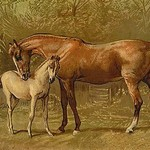 Thoroughbred Mare and Foal by Samuel Sidney - Art Print