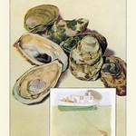 Oysters - Art Print