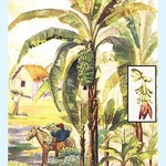 Banana Trees - Art Print