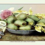 A Dish of Medlars, a Rose, and Almonds by Giovanna Garzoni - Art Print