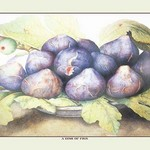 A Dish of Figs by Giovanna Garzoni - Art Print