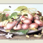 A Dish of Plums, Nuts, Jasmine and a Fly by Giovanna Garzoni - Art Print