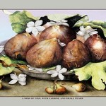 A Dish of Figs with Jasmine and Small Pears by Giovanna Garzoni - Art Print