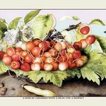 A Dish of Cherries With a Bean and a Hornet by Giovanna Garzoni - Art Print