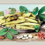 A Dish of Broad Beans by Giovanna Garzoni - Art Print