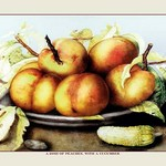 A Dish of Peaches with a Cucumber by Giovanna Garzoni - Art Print