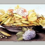 A Bowl with Pears and Two Roses by Giovanna Garzoni - Art Print