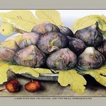 A Dish with Figs, Fig Leaves and Small Pomegranates by Giovanna Garzoni - Art Print