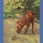 An Irish Terrier Puppy by Diana Thorne - Art Print