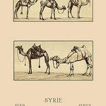 A Variety of Howdahs from Syria by Auguste Racinet - Art Print