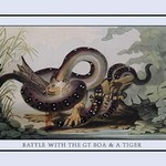 Battle Between the Great Boa and a Tiger by J.H. Clark - Art Print