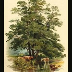 Alder Tree by W.H.J. Boot - Art Print