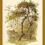 Apple Tree by W.H.J. Boot - Art Print