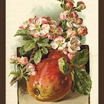 Apple Blossom & Fruit by W.H.J. Boot - Art Print