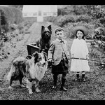 Boy and Girls with Two Dogs and a Wagon by Bains News Service - Art Print