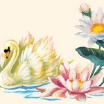 Swan Swimming By Pond Flowers - Art Print