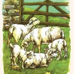 Woolly Sheep in the Pasture by Bird & Haumann - Art Print