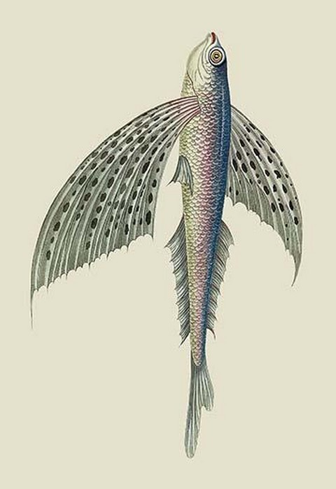 Winged Fish by J. Forbes - Art Print
