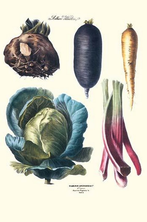 Vegetables; Rhubard, tubers, and cabbage by Philippe-Victoire Lev que de Vilmorin - Art Print