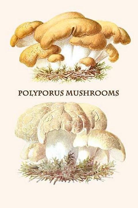 Polyporus Mushrooms By Edmund Michael Art Print B058730014