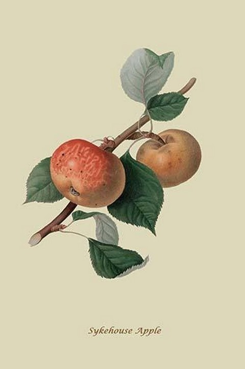 Sykehouse Apple By William Hooker 2 Art Print B0587308621