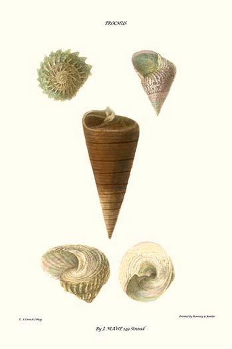 Top Shells By John Mawe - Art Print